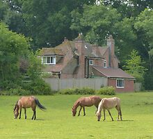 New Forest Ponys by normhill