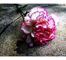 Pink Carnation No. 1# Photographic Print