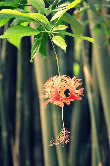Jungle Beauty by BirgitHM