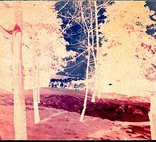 Woodlands by taudalpoi