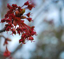 spring beginnings  by Jeff Stroud