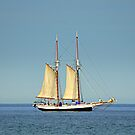 Tall Ship Madeline by Debbie  Maglothin