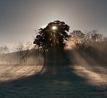 Sunrise over Yarra Valley In Winter by Chris Putnam