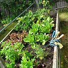 edible garden by evon ski
