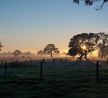 Winter Sunrise by Maria  Varlet