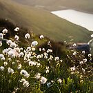 Greenfield Cotton Grass by James Grant