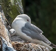 Kittiwake And Chick by Moonlake