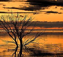 Menindee Orange by Chris Brunton