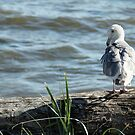 Soaking Up the Sun by Tracy Friesen