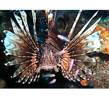 Caribbean Lion Fish guarding the Coral Reef Photographic Print