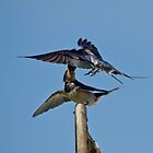 Swallows by Margaret S Sweeny