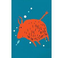Water Buffalo Love Photographic Print