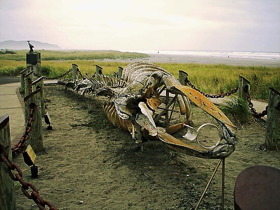 Gray (Right) Whale Skeleton by debidabble