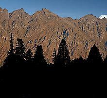 Pine Silhouettes On The Remarkables by phil decocco