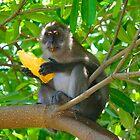 mango monkey by demor44