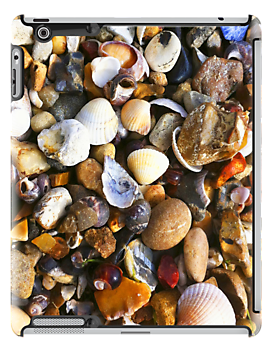 Pebbles & Shells at the Seaside by Jovan Djordjevic