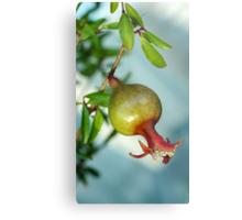 pomegranate on branch Metal Print