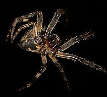 Garden Spider weaving #2 by Kane Slater