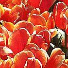 A Crowd of Orange by wandringeye