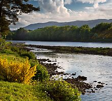 River Ness by diggle