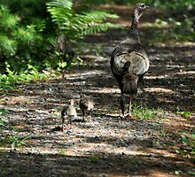 Mama Turkey and Chicks by RoyceRocks