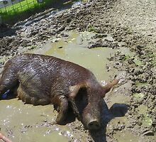 Happier Than a Pig in Mud by MaryinMaine