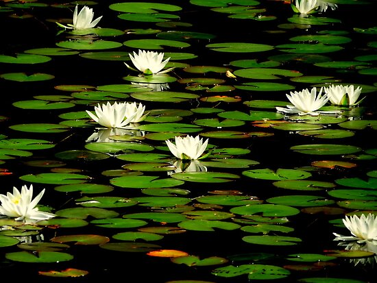 The Lily Pond...Waldport, Oregon by trueblvr