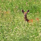 Deer on the Prairie by lorilee