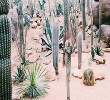 Desert Print  by heavensends