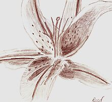 Oriental Lily by Jay Reed