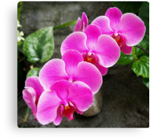 Fuchsia Pink Tropical Orchid Flowers near Waterfall Canvas Print