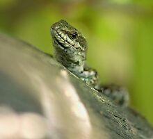 lizard by slavikostadinov