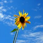 Lone Yellow Sunflower against the Summer Blue Sky by Amy McDaniel