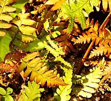 Late Summer Ferns by WildestArt