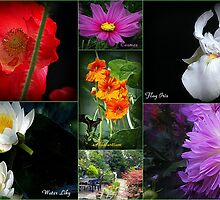 Summer Colours by naturelover