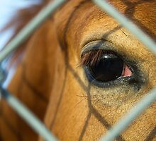 I Through the Fence by Randy Turnbow