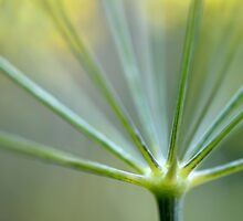 Dill Stem by Helen J Cherry