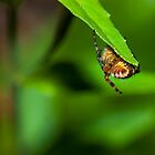 Spider under leaf by Mark Smith