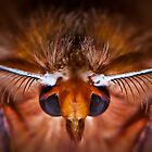 Moth, face. by Mark Smith
