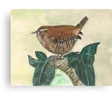 Wren on ivy leaves Canvas Print