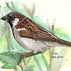 Male House Sparrow by Sam Burchell