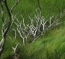 Fallen Cedar by RVogler