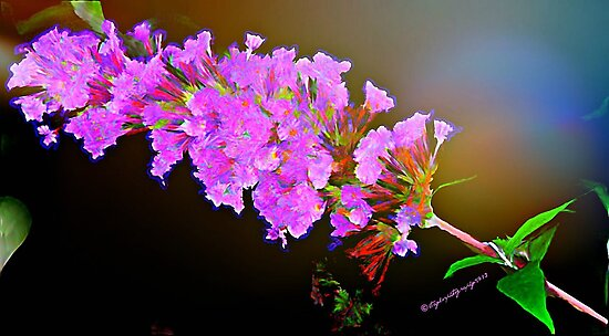 Attracting Blossom by Lisa Taylor