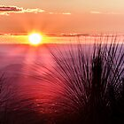 Grasstree Sunset by Silken Photography