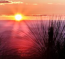 Grasstree Sunset by Peta Thames