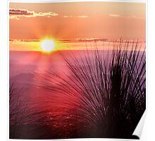 Grasstree Sunset Poster