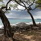 Twin Trees on Ahihi Bay by Chris Sauerwald