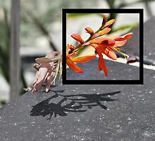 Flower Frame by VictoriaSM