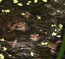'Russian Frogs' ? Big, smaller, and small.... by Rivendell7