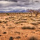Flinders Ranges pastoral land by Chris Brunton